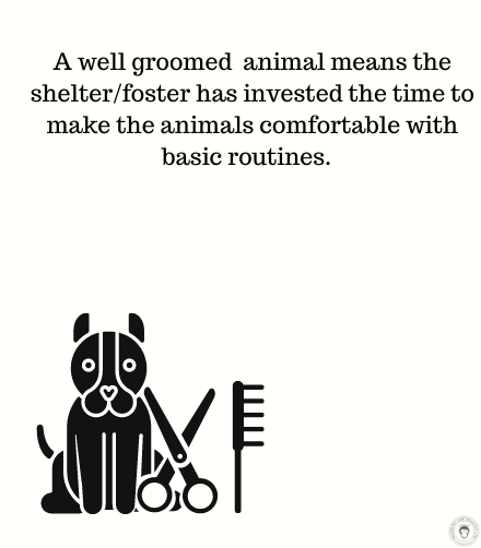 Basic grooming for animals