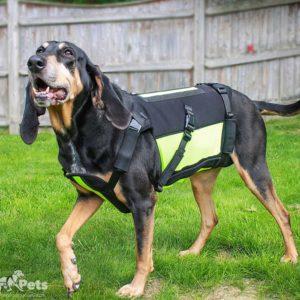 hound dog spine support
