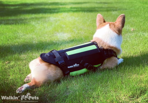 spinal support for dogs