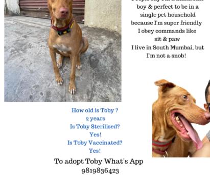 dogs for adoption in Mumbai