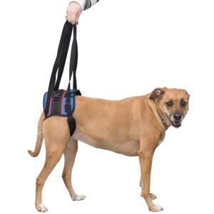 body belt for hip dysplasia